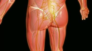 nervo sciatico e sciatalgia