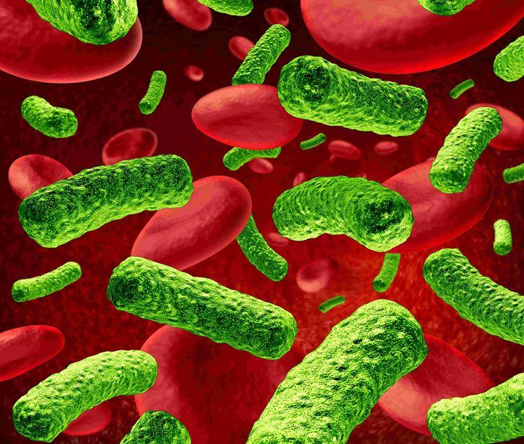 Un'infezione batterica in atto