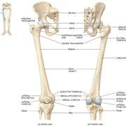 Femore anatomia