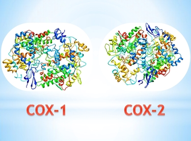 Struttura tridimensionale delle cicloossigenasi