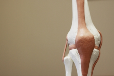 Facsimile dell'articolazione del ginocchio