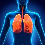 I polmoni sono avvolti dalla pleura
