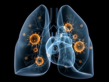 Rappresentazione dei polmoni umani<p />