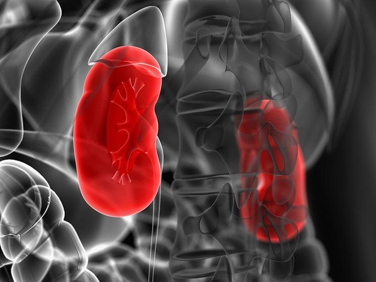 Immagine 3D dei reni