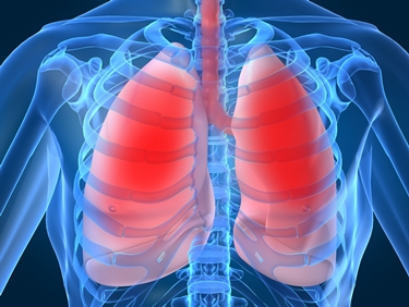 Posizione dei polmoni nel torace