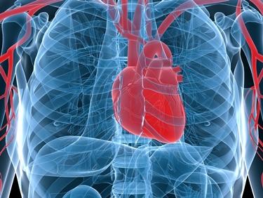 Posizione del cuore nel torace