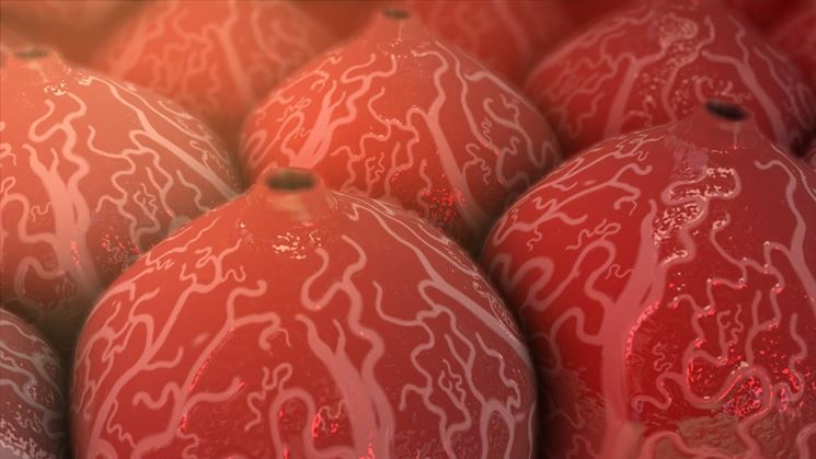 Cellule fegato epatite