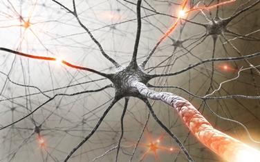 La trasmissione dell'impulso nervoso
