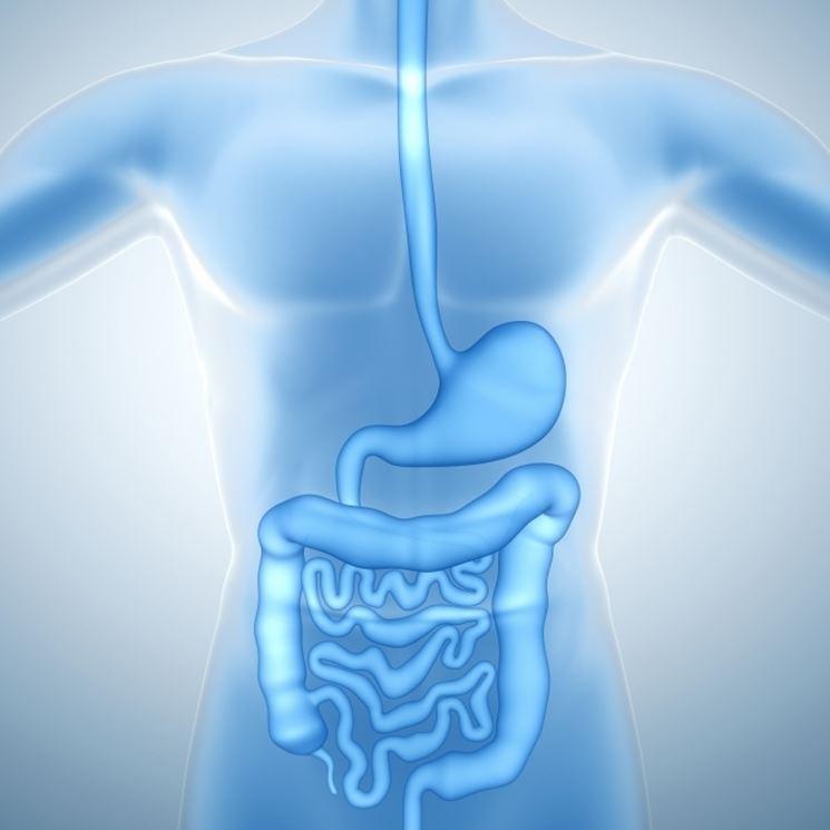 Immagine del colon