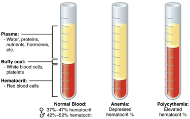 I corretti valori del sangue