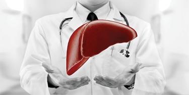 Medico, fegato sano