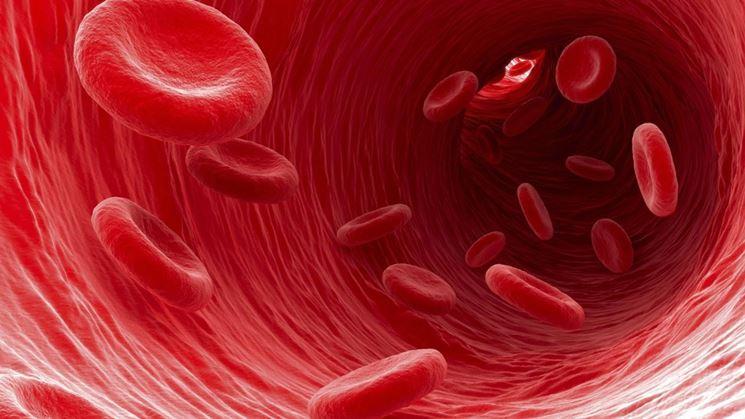 Globuli rossi microscopio