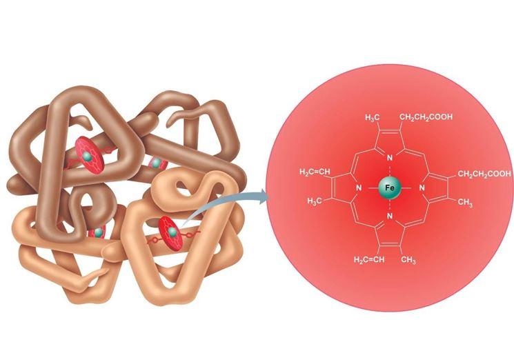 L'hgb emoblogina è formata da quattro catene proteiche