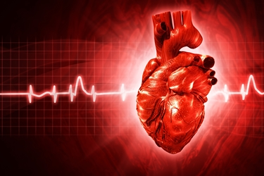 L'infarto rilascia mioglobina